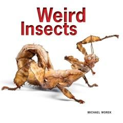 'Weird Insects'  by  Michael Worek, Stephen Archer Marshall