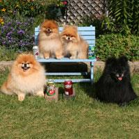 The Soda Pups