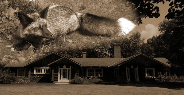 A History Of The Fromm Brothers Fur Farm